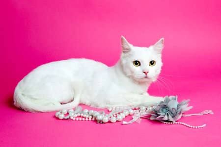 a beautiful white cat on a pink background Stock Photo