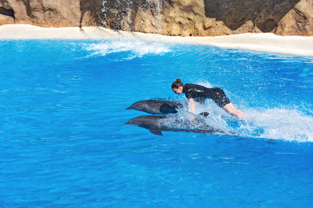 Spain, Tenerife - 09.13.2016: Dolphin show in the Loro Parque (Loro Parque), Tamer floats holding the fins of two dolphins Editorial