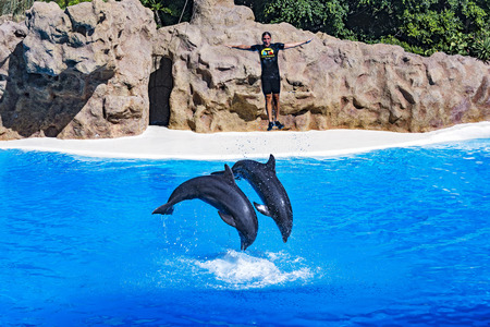 Spain, Tenerife - 09.13.2016: Dolphin show in the Loro Parque (Loro Parque), two dolphin trainer pushed out of the water