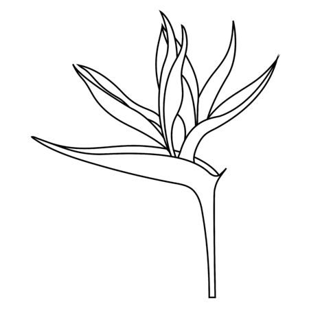 Empty outline of Strelitzia reginae flower or bird of Paradise Flower for coloring.Official flower of Los Angeles. Isolated on white background, flat style