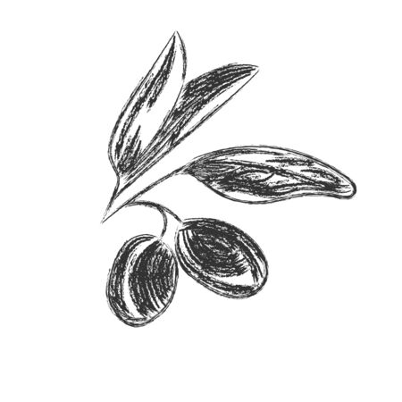 Vector pencil drawing of olive branch isolated on white background in Doodle style for kitchen design, oil or cosmetics. Flat design.