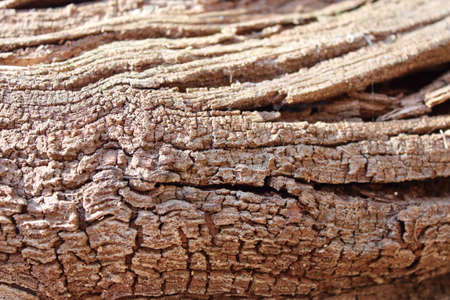 sinuous texture of a dry wooden trunk