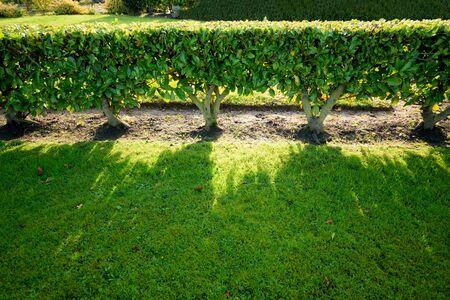 green living: Green living fence Stock Photo