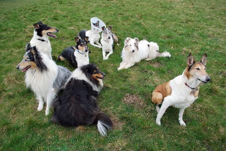 Groupe de chiens
