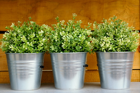 to plant: Three metal garden pots with plants
