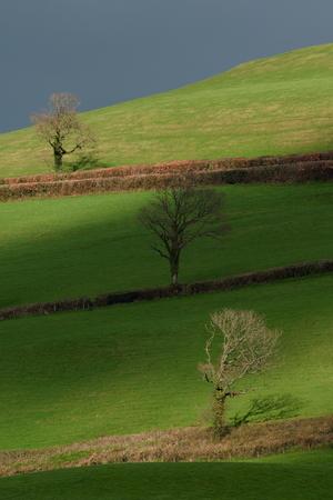 Farmland in Blackdown Hill AONB (Area of Outstanding Natural Beauty) in Devon, England