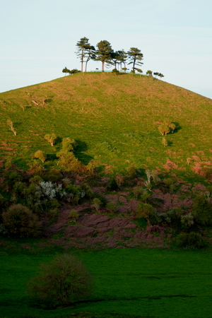 distinctive: Iconic Colmers Hill near village of Symondsbury in southwest Dorset, England Stock Photo