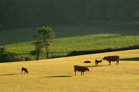 Early morning on farmland in Blackdown Hills AONB (Area of Outstanding Natural Beauty), Devon Stock Photo