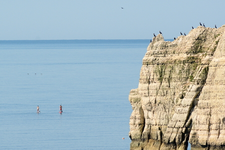 near beer: Flock of cormorants resting on a cliff while people enjoy paddling near village of Beer, Jurassic Coast Stock Photo