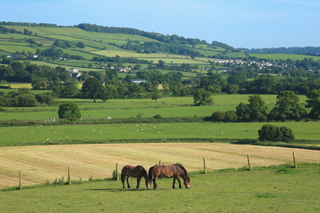 Two horses graze on a farmland in Axe Valley, Devon Banco de Imagens - 81553674