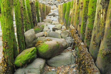 Weathered wooden groyne on the beach in village of Lynmouth, Devon during low tide Stock fotó