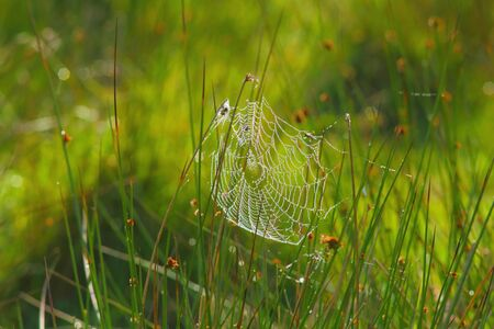 Spider web on the misty morning in Seaton Wetlands Nature Reserve, devon Stockfoto - 150296430