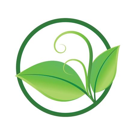 green leaves - Illustration