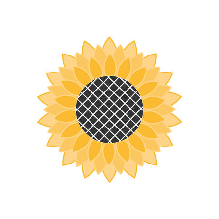 Yellow sunflower close-up isolated on white background. Flat design.