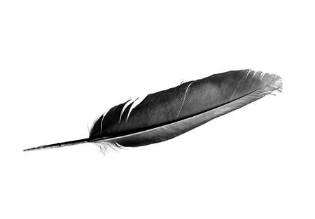 Dove Feather isolated bird feather on a white background