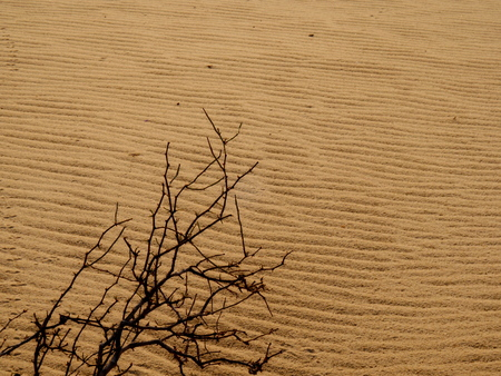 deserted plant in the sand