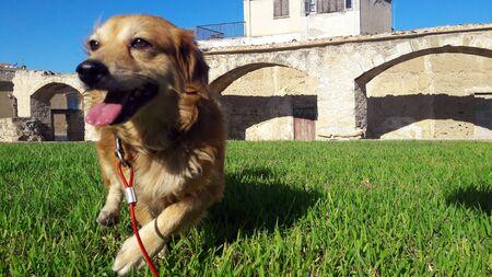 ヘラクリスはキプロスで素晴らしいフレンドリーで愛情のある犬 写真素材