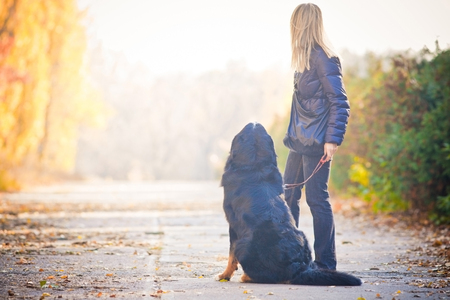 Bernese mountain dog walking in an autumn park, sits on the sidewalk and they look away, turning their backs. Copy space on the left.