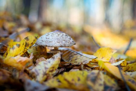 Toadstool in the autumn forest.
