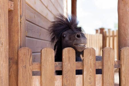 Pony looks through the fence at visitors zoo.