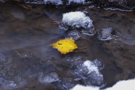 thawed: The yellow autumn leaf lies in a pool with snow and ice