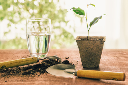 garden tools on a wooden table with earth, peat pot and green sprout