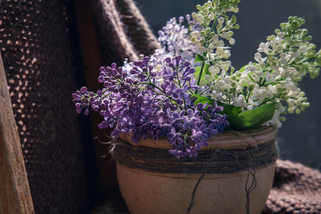 the blossoming lilac branches in clay a pot on the old wooden chair covered woolen a handmade plaid, close up