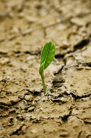 Rising sprout on dry ground photo