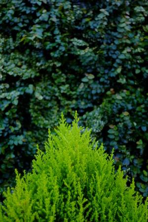 dark: leaf green dark background