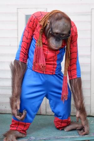 spiderman: Funny Monkey