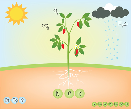 nutrient of a plant Ilustrace
