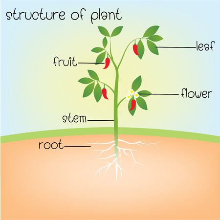 structure of plant