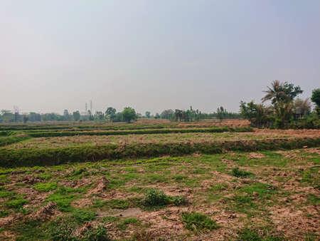 Cassava farm countryside agriculture dry