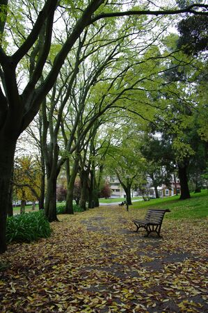 Autumn leaves and trees in a garden with a bench