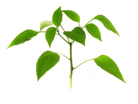 small green plant photo