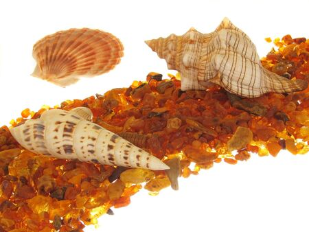 Starfish collage photo