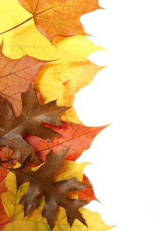 leaves in beautiful autumn colours on white background Stock Photo - 633559