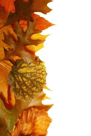 pozostawia w piękne kolory jesieni na białym tle Zdjęcie Seryjne