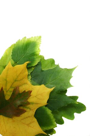 leaves in beautiful autumn and spring colours on white background Stock Photo - 633558