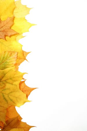 leaves in beautiful autumn colours on white background Stock Photo
