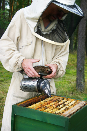man in a beekeepers outfit checking a beehive. Stock Photo
