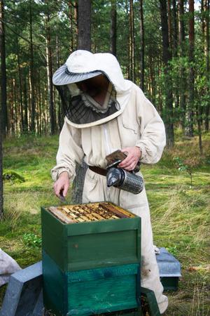 mężczyzna w stroju pszczelarzy kontroli ulu. Zdjęcie Seryjne