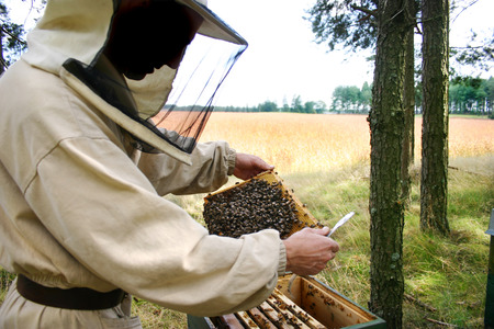 industrie: man in a beekeepers outfit checking a beehive. Stock Photo