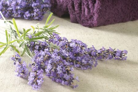 Bunch of lavender with bath towels, selected focus.