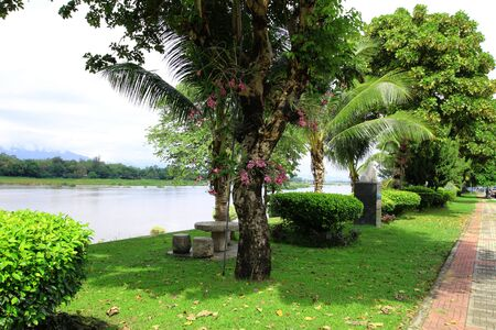 along: Trees along the park in thailand