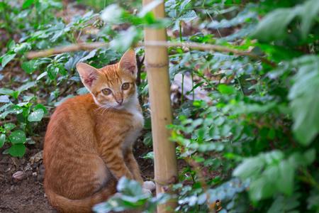 Cat see camera with bush, close up, eye contact, cute Stock Photo