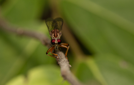 Close up image of robber fiy insect in nature good shot from thailand macro Imagens