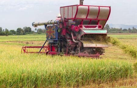 Moissonneuses-batteuses sur rizière Banque d'images
