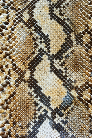 Snake skin pattern background photo