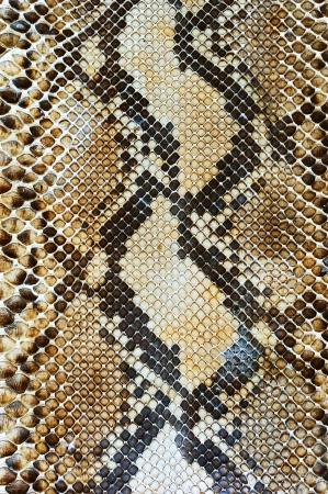 snakeskin: Snake skin pattern background